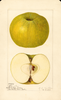 Apples, Alfriston (1921)