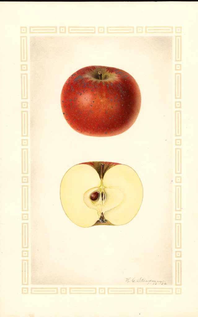 Apples, Cox Orange (1926)