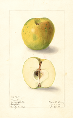Apples, Franklin (1909)