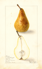 Pears, Dudley Houghton (1909)