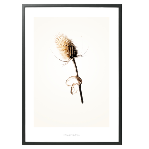 Hagedornhagen Art Print - 'Gold' Series #3