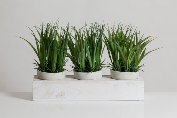 "8"" Grass in White Wooden Pot - Cacti Collection"