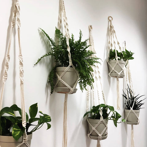 Learn to Make a Stunning Macrame Plant Hanger
