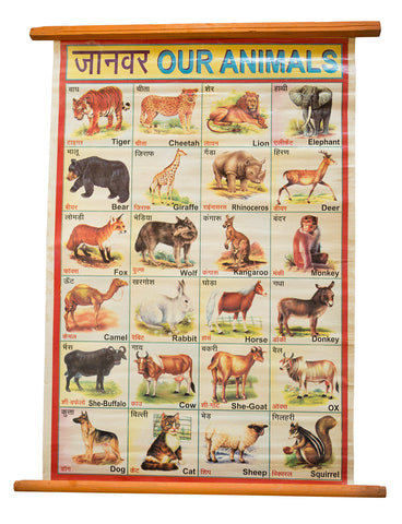 Indian Educational Chart: Animals. Vintage Science Poster, Well Done Goods