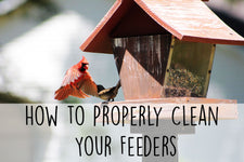 cleaning-feeders