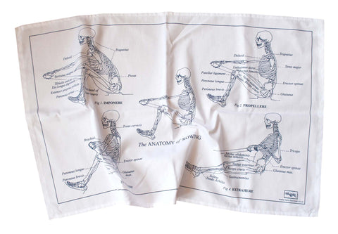 Anatomy tea towel