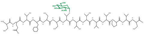 IRS2 (GlcNAc T1155) peptide