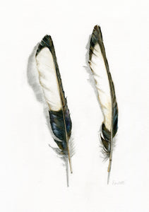 pencil mixed media watercolour magpie feathers