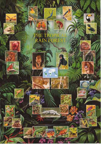 Tropical Rainforest Animals Poster