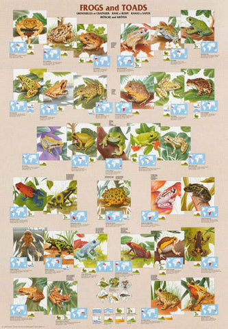 Frogs Toads Amphibians Poster
