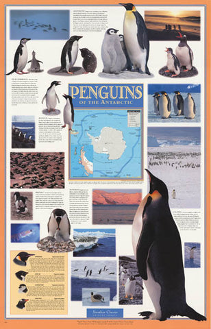 Penguins of Antarctica Infographic Poster