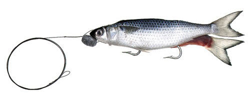 Rigged Split Tail Mullet - Frozen