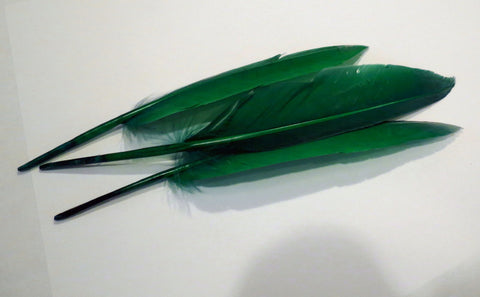 Duck quills, dyed