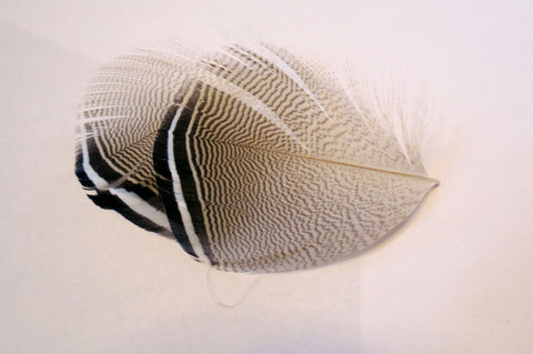 Wood duck feathers, barred