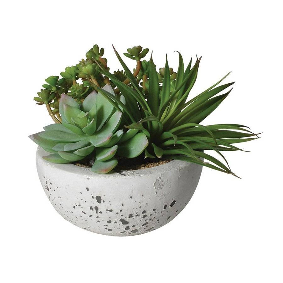 Assorted Green Succulents In Grey Cement Bowl - The Farthing