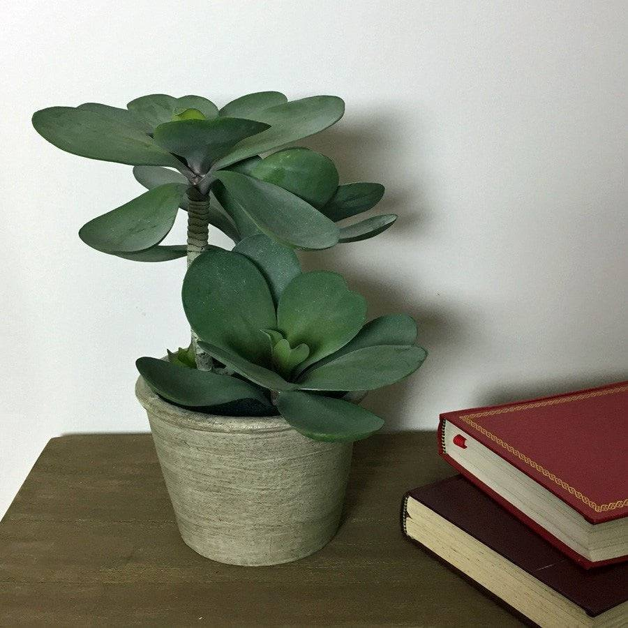 Potted Green Kalanchoe Succulent - The Farthing