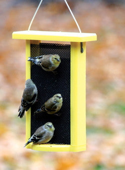 Recycled Nyjer Feeder