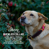 Boy O Boy Bridleworks Skinny Custom Dog Collar with Buckle