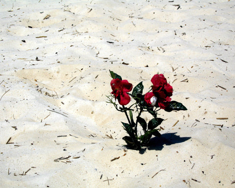 Flowers in the Sand Greeting Card (Where He Loves Version)