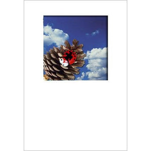 Buggles Ladybird on Pine Cone Greeting Card