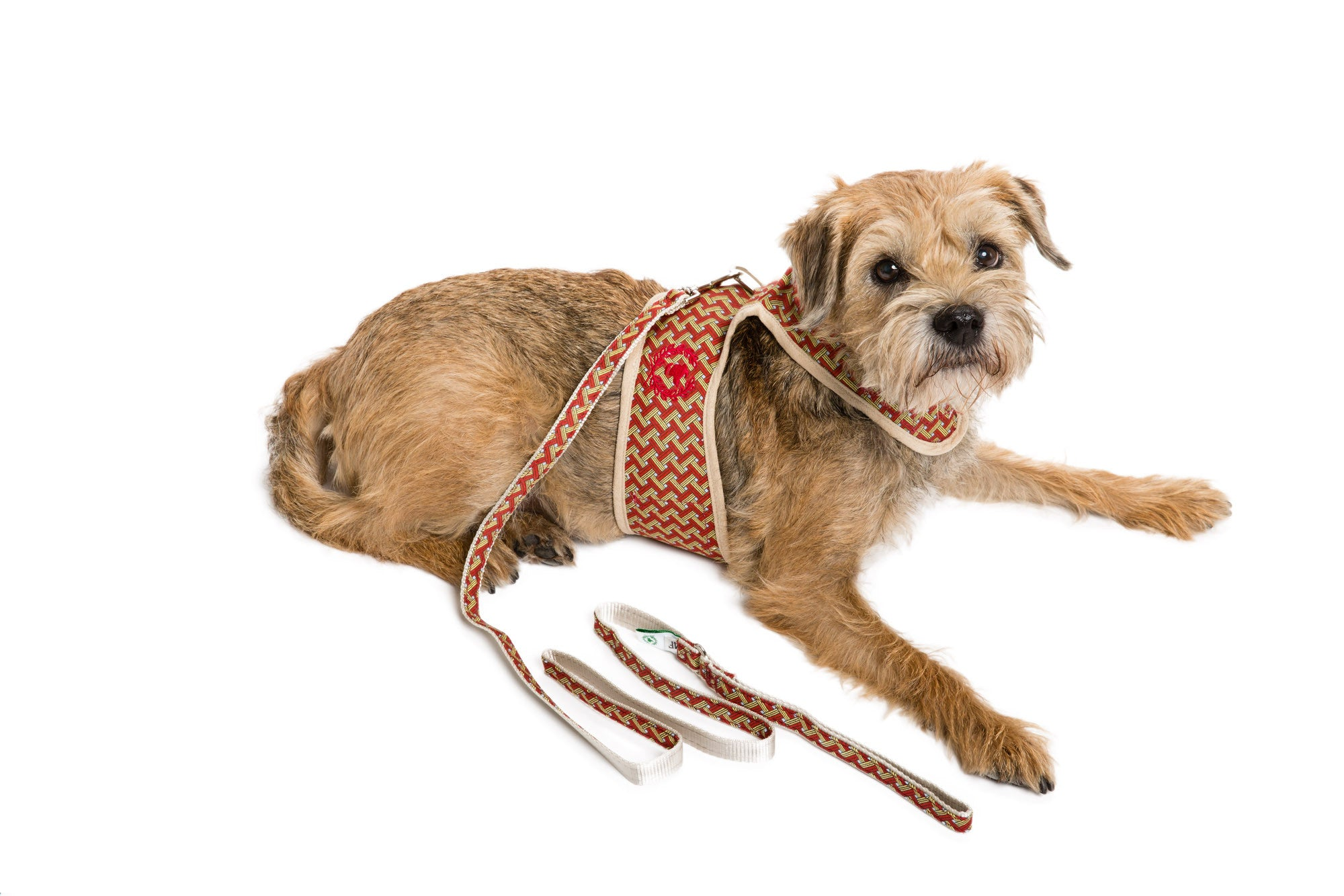 Signature Collection - UNLINED Dog Body Harnesses & Leads - 3 Options