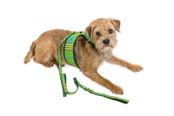 Signature Collection - Dog Body Harness Vest & Lead - UNLINED - 5 Color Options