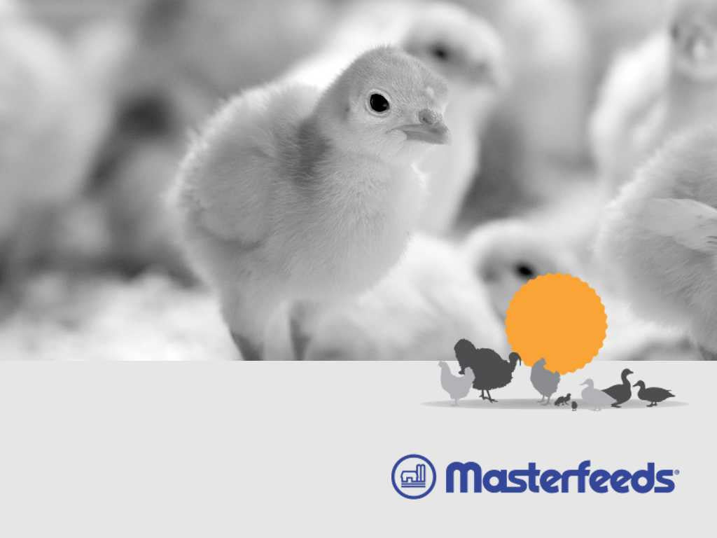 Masterfeeds-Game Bird Ration