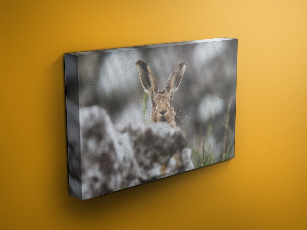 Caught Short Harry - Hare Canvas