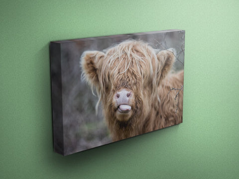 Raspberry Cow - Cow Canvas