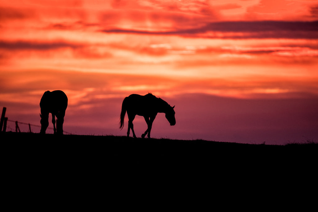 Sunrise With Horses Print