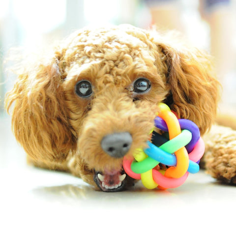 5cm Colorful Rainbow Pet Bell Ball Dog Toy Cat Toys Pet Dog Ball Bell Chew Toys Play Teeth Training Pet Products