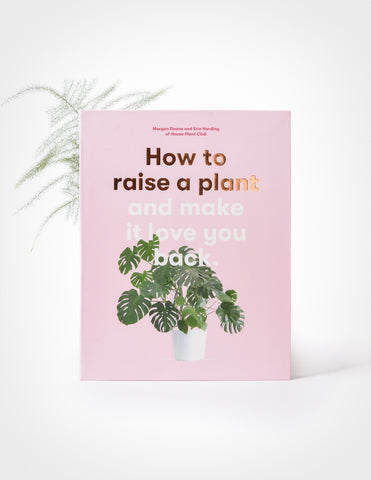 How to Raise a Plant and Make It Love You Back - House Plant Club - Pistils Nursery
