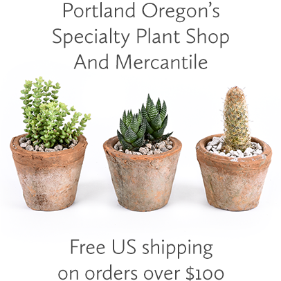 Explore Pistils Nursery: Portland Oregon's Specialty Plant Shop and Mercantile