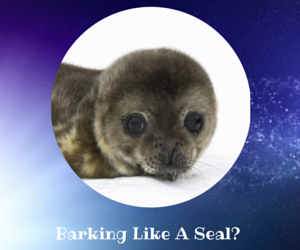 Barking Like A Seal Pack - 10% off