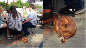This Purse Looks Like a Dog, and People Can't Stop Laughing