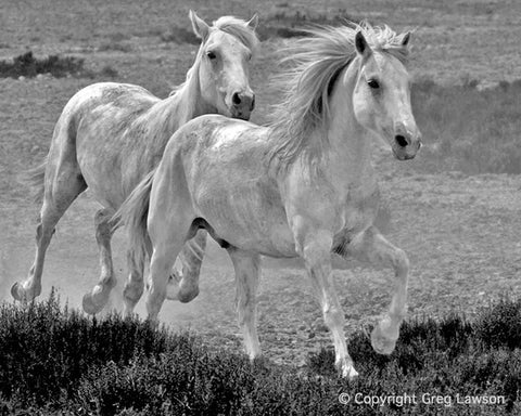 Camargue Spirit - Greg Lawson Photography Art Galleries in Sedona