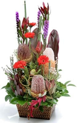 BN 07 Natives and Traditional blend Arrangement