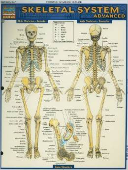 SKELETAL SYSTEM ADVANCED - Charles Darwin University Bookshop