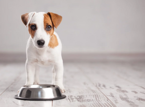 RAW FOOD WITH KIBBLE – CAN YOU MIX THE TWO?