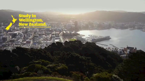 Study in Wellington video - English subtitles