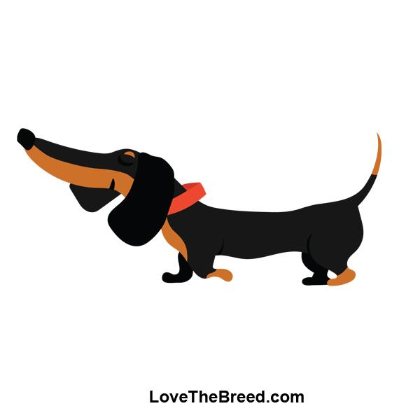Dachshund Black and Tan Small Cooler Bag Blue