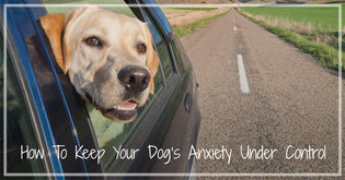 How To Prevent Travel Anxiety in Dogs Part 2
