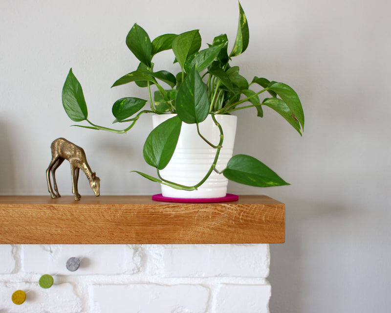 plant pot on a pad
