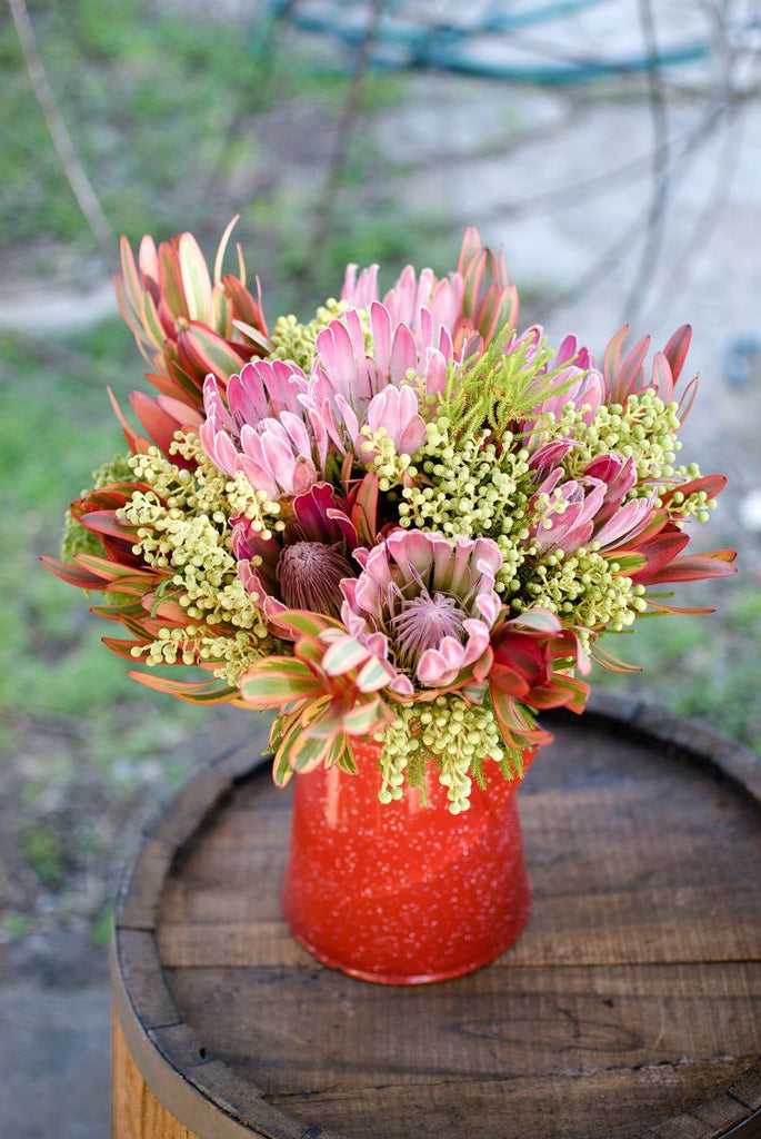 Protea South African National Flower Fabulous Flowers