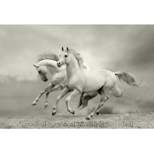 Modern Charming White Horse Art Decorative Drawing Canvas Wall Poster Picture