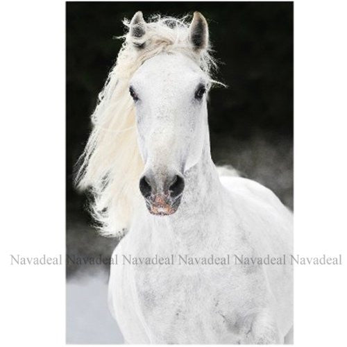 Black White Running Horse Portrait Art Decorative Canvas Wall Poster