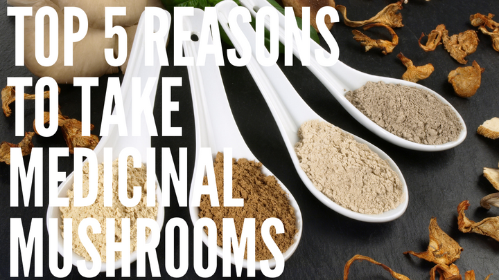 Top 5 Reasons to Take Medicinal Mushrooms