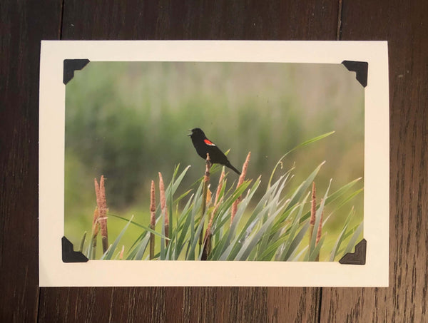 Bright White Felt Photo Mount Note Cards - (color #N3878)