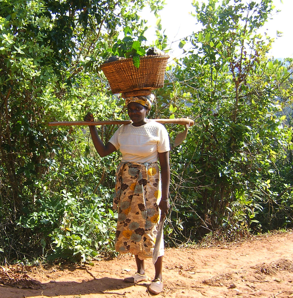 Malawi, Phoka Hills -  Limited Edition - Womens Coffee Micro-lot