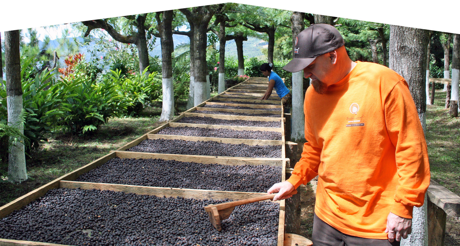 Steve Sims at coffee farm drying bed